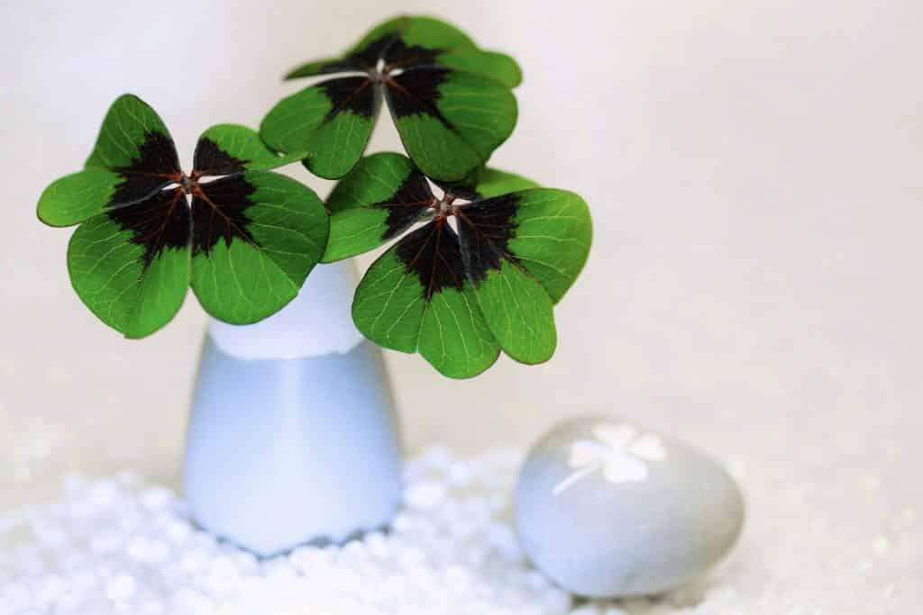 St. Patrick's Day Party Ideas: Decorations